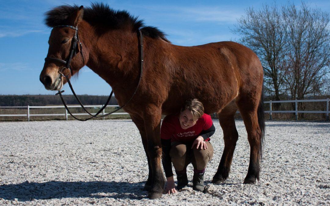 Tierkommunikation – die geistige Verbindung mit dem Tier