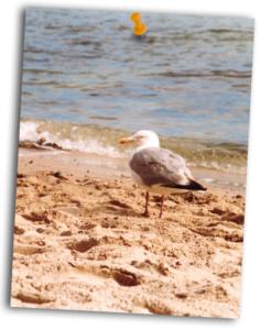 Strand mit Möve