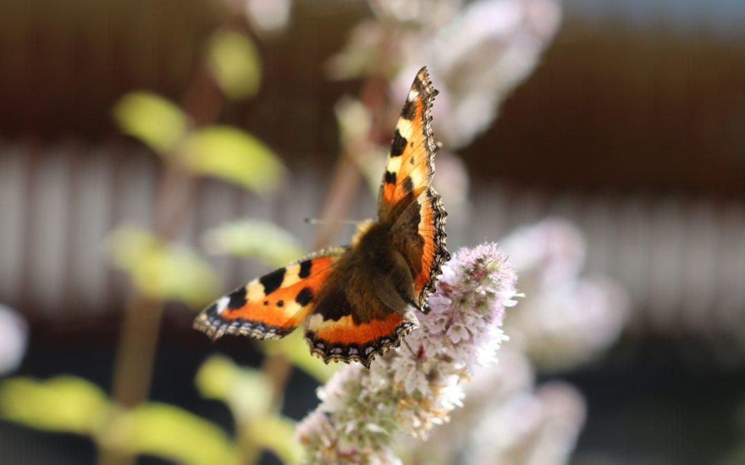 Der Schmetterling am Fenster